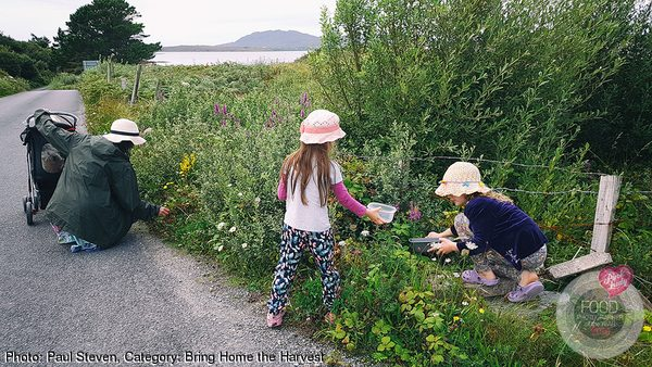 Blackberry Picking In Ireland
