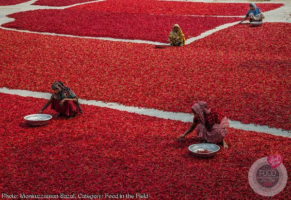 Field of Red Chillies