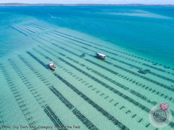 Coffin Bay Oyster Farm