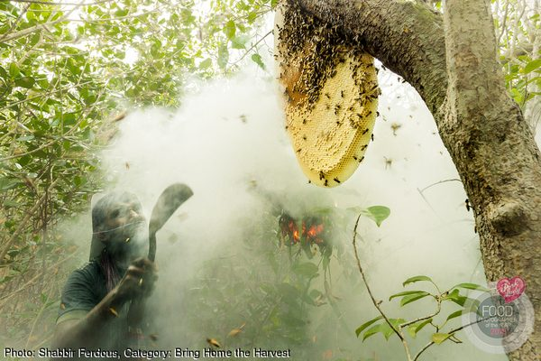 Honey Hunting in Mangrove Forest