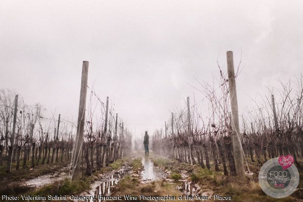 A Vineyard Amidst the Venetian Mist