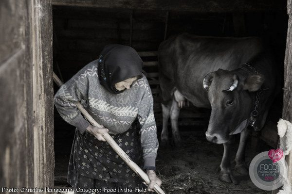 Maria mucking out the stable tending her most essential companion- her cow