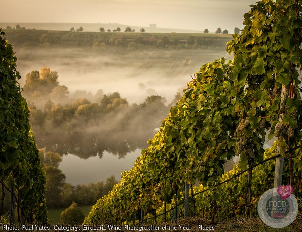 Glorious morning mist over the vineyard in Franconia, Germany.