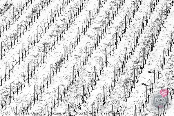 Vineyard after light snowfall, Volkach, Germany.