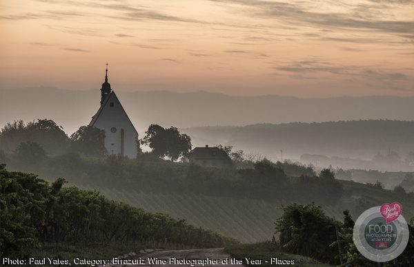 Sunrise in the vineyards of Franconia, Germany.