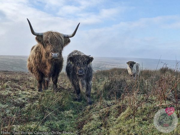 Exmoor Beasts