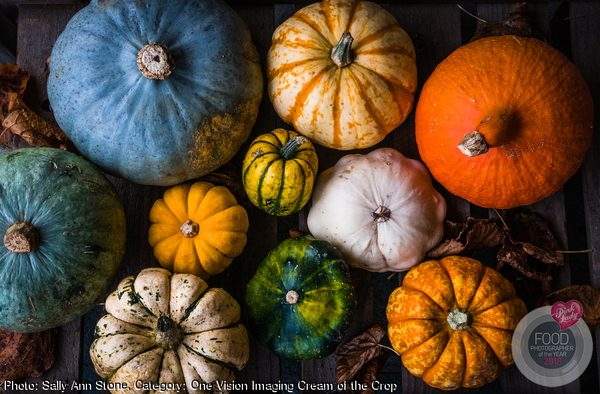 Palette of Pumpkins