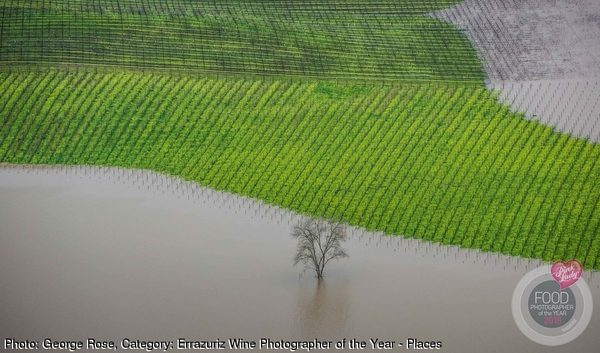 Vineyard Flooding, Sonoma County