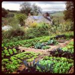 Jason Ingram - Charles Dowdings Vegetable Plot