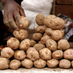 Sarit Saliman - Close-up potato land for sale - Uganda, Africa