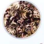 chelsea_bloxsome_octopus