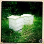jacqueline_franklin_bee-hives