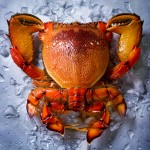 louise_lister_spanner-crab