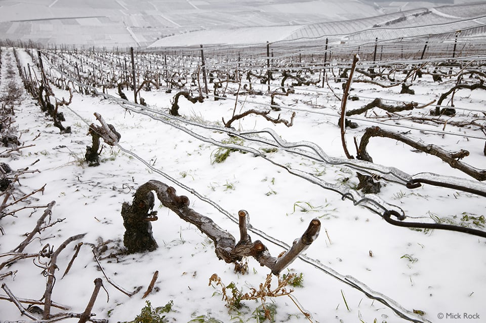 Ice encrusted vines and wires in Pinot Noir vineyard on the Montagne de Reims above Ay, Marne, France. [Champagne]