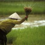 owen_franken_laos-rice-planting