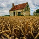 ron_smith_wheat-crop-in-france