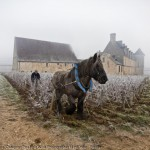 thierry_gaudilere_horse_ploughing_clos-vougeot